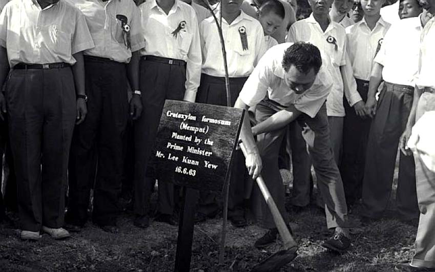 PM Lee Kuan Yew Planting a Tree